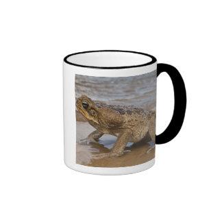 Cane Toad Rhinella marina, previously Bufo Ringer Mug