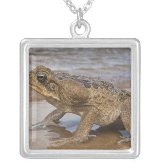 Cane Toad Rhinella marina, previously Bufo Silver Plated Necklace