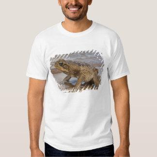Cane Toad Rhinella marina, previously Bufo T Shirt