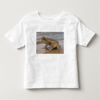 Cane Toad Rhinella marina, previously Bufo T-shirts