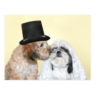 Canine Bride and Groom Postcard