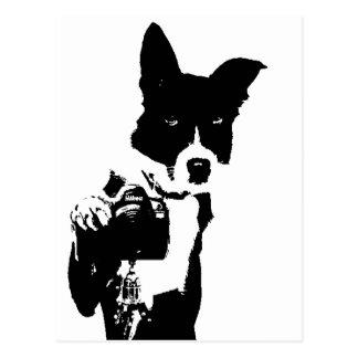 Canine Photographer Postcard