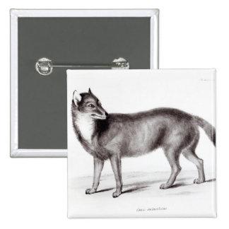Canis Antarcticus 15 Cm Square Badge