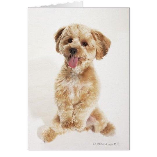 Canis familiaris card