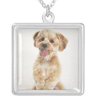 Canis familiaris necklaces