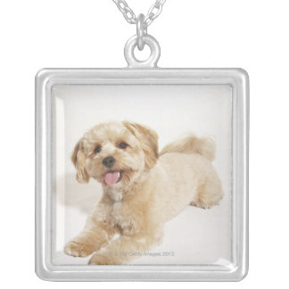 Canis familiaris silver plated necklace