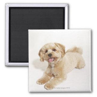 Canis familiaris square magnet