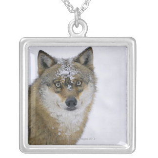 Canis lupus, Looking at Camera, Germany, Europa Square Pendant Necklace
