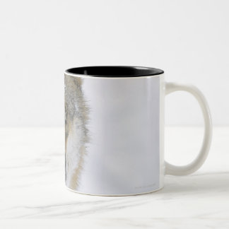 Canis lupus, Looking at Camera, Germany, Europa Two-Tone Coffee Mug