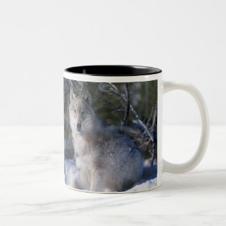 Canis_lupus_wolf, Canis_lupus_wolf Coffee Mug