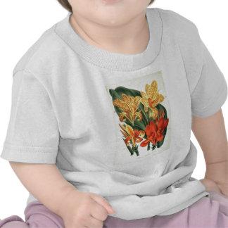 Canna Hybrids - Botanical Art Tshirts