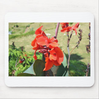 Canna Lilly Mouse Pad