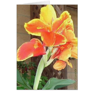 Canna Lily notecard Note Card