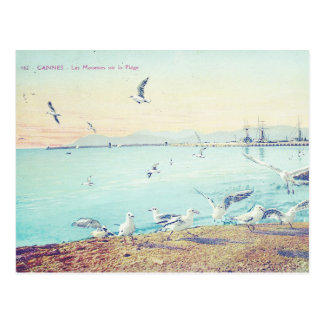 Cannes Beach Seagulls Postcard