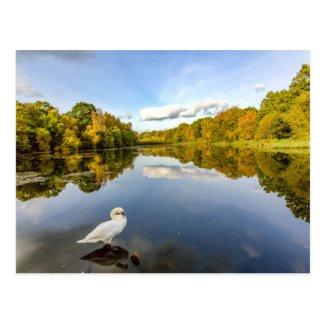 Cannop Ponds Postcard
