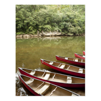 Canoeing the Macal River, Belize Postcard