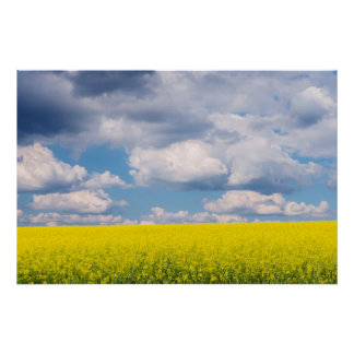Canola Field and Clouds Poster