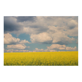 Canola Field and Clouds Wood Print