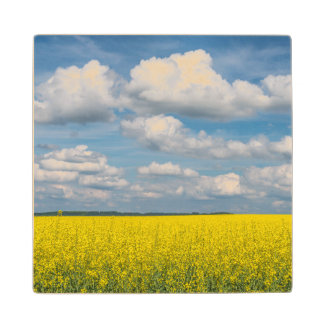 Canola Field & Clouds Wood Coaster