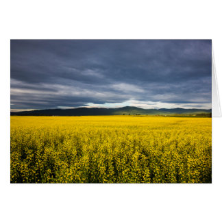 Canola field in morning light in the Flathead Card