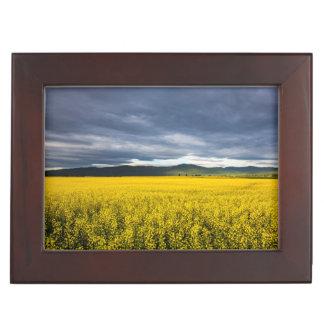 Canola field in morning light in the Flathead Keepsake Box