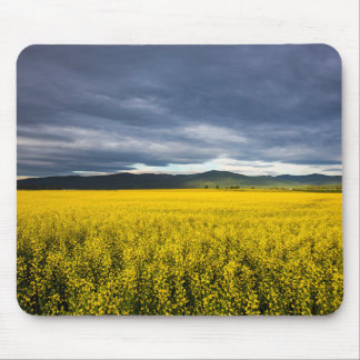 Canola field in morning light in the Flathead Mouse Mat