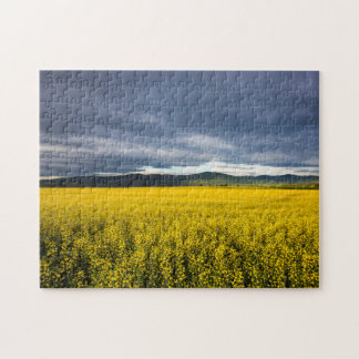 Canola field in morning light in the Flathead Puzzle