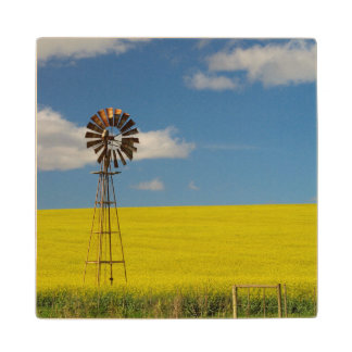 Canola Field, Near Bredarsdorp, Western Cape 2 Wood Coaster