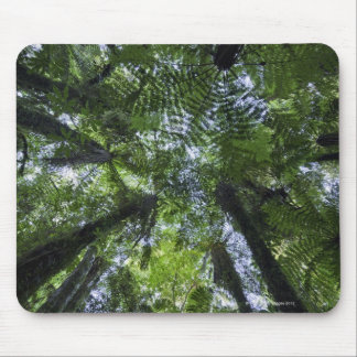 Canopies of ponga trees in lush native bush mouse mat