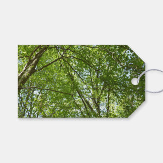 Canopy of Spring Leaves Green Nature Scene Gift Tags