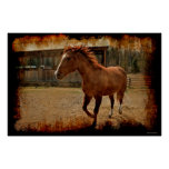 Cantering Sorrel Horse Comes Home to the Barn Poster