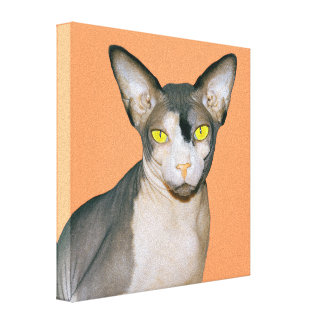 Canvas 8x8 Sphynx Cat Photo Art (Apricot) Stretched Canvas Prints