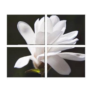 Canvas Art-Star Magnolia Flower Stretched Canvas Prints