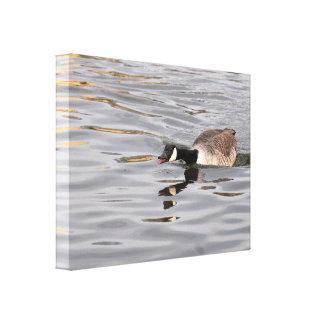 Canvas: Canada Goose Canvas Print