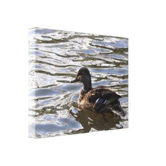 Canvas: Female Mallard Duck Canvas Print
