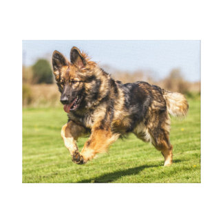 Canvas German Shepherd Dog Alsatian dog happy
