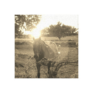 Canvas Horse Pictures