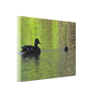 Canvas: Mallard Duck and Duckling Canvas Print