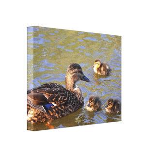 Canvas: Mallard Duck and Ducklings Canvas Print