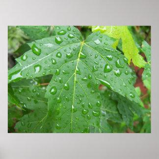 Canvas Maple Leaf after Summer Rain Print