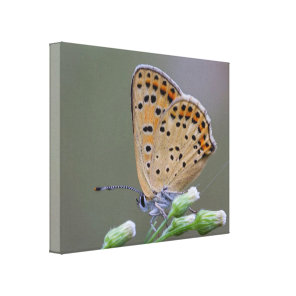 Canvas Print Butterfly - Mama