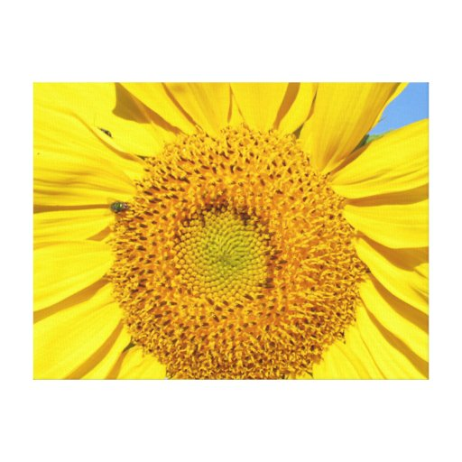 Canvas Print - Fly on Sunflower