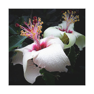 Canvas Print - Heavenly Hibiscus