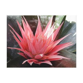 Canvas Print - Pink Bromeliad Flower