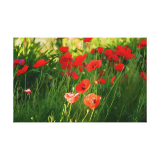 Canvas Print Poppies In Garden
