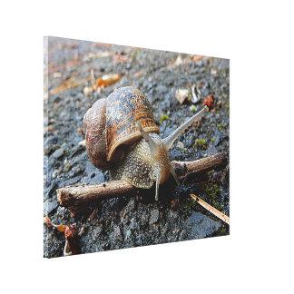 Canvas Print - Sammy the Snail