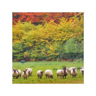 Canvas - Sheep Family