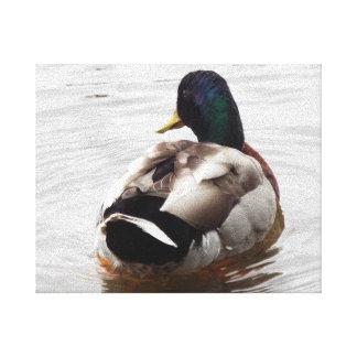 Canvas - Swimming Duck