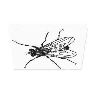 Canvas Wall Art: Fly on the Wall