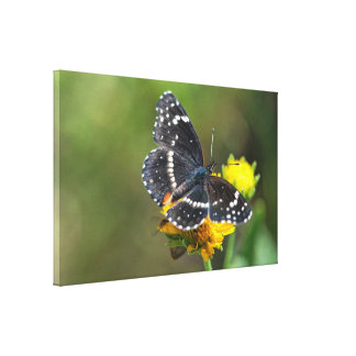 Canvas Wrap: Bordered Patch Butterfly #3